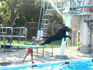 dog jumping off diving board
